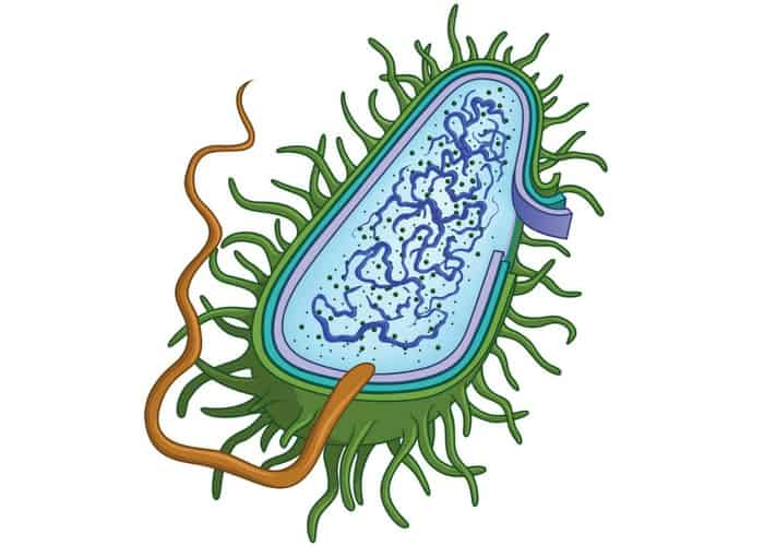 Bacterial structures