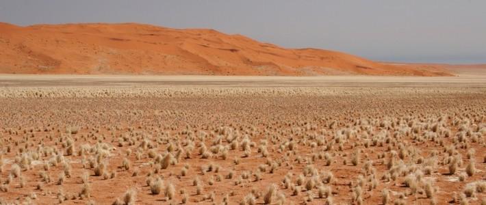 Desert vs desert - Desert