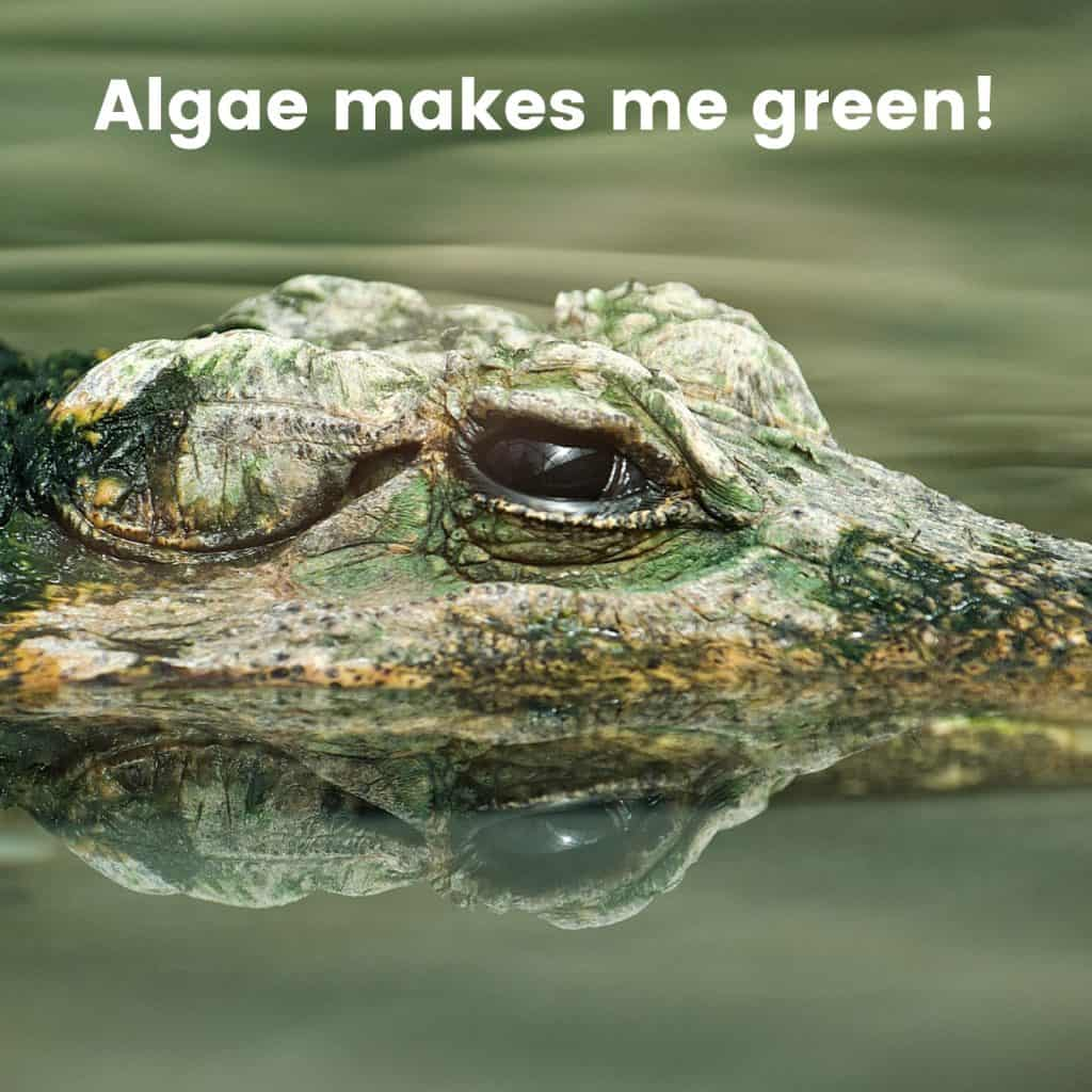 Algae makes me green!