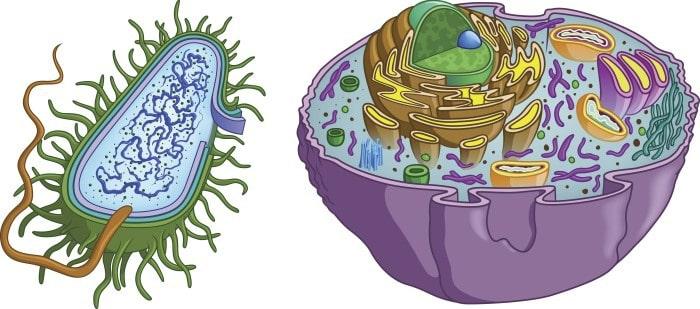Prokaryotes vs Eukaryotes Structures