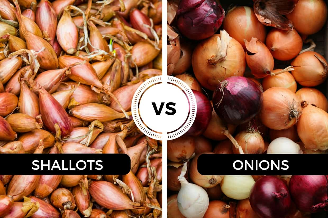 shallots vs onions - one small and slender, one big and round